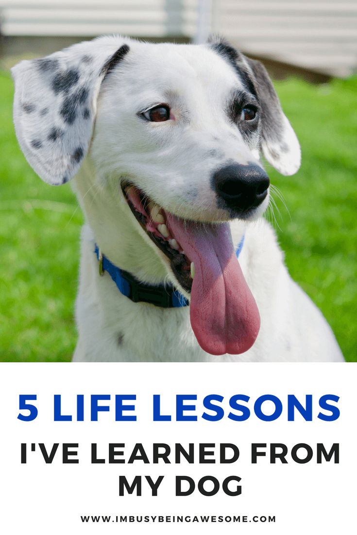 5 Life Lessons I've learned from my Dog Life lessons, advice, self discovery, dog tips, dog advice, dog lover #dogs #doglover #selfdiscovery #happiness